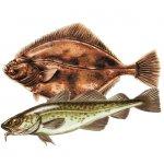 Zielfisch